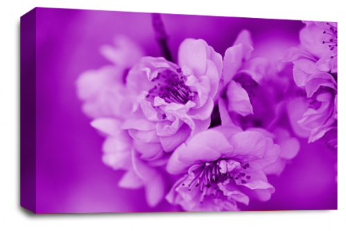 Floral Flower Wall Art Picture Purple Grey Spring Blossom Print